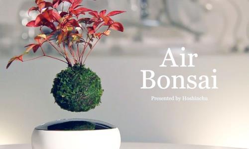 Air bonsai là món quà cuối năm rất khác biệt